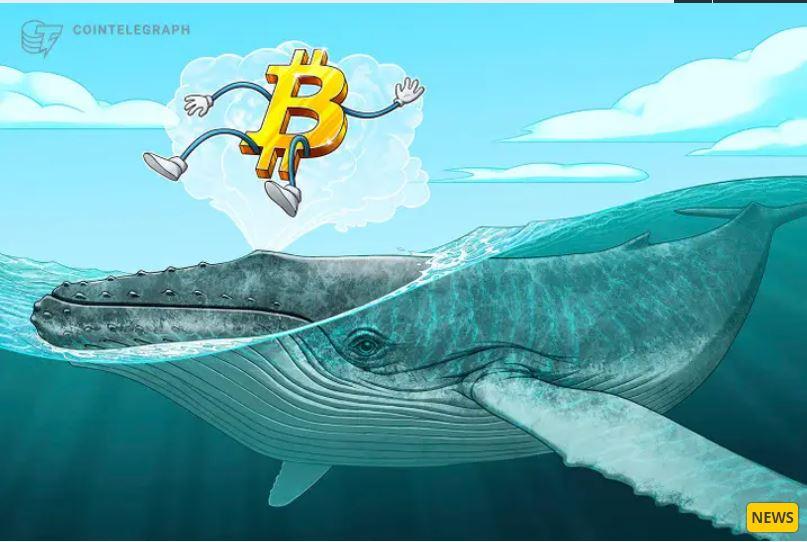 Nhiều cá voi Bitcoin đã thức dậy khởi động ví tiền khủng